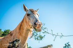 Ibiza Roadtrip Funnyl Horse <3 :-) http://littlecity.ch/ibiza-im-herbst-roadtrip-durch-die-insel-mit-dem-seat-ibiza/