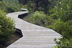 winding wooden path