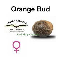 Alors, Georgie cette idée que tu avais pour ce soir. Parle-nous-en en détail. Orange mécanique (71) #orange #mechanic #auto #flowers #dinafem #shop #shopping #collector #graines #collection #new #vannes #bzh #plante #bretagne #amsterdam #green #citation #medical #france #autodinafem #nature #naturelovers #french #seed #bank #high #jardin #jardinage #bud #weed #happy #séné #morbihan #magasin #love #grow #sensi #sensiseeds #dutchpassion #nirvana #barney's #farm #frenchtouch #medical #mrnice