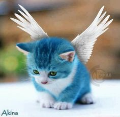 Fairy Tail - Happy~Who knew animals did cosplay?!? :D