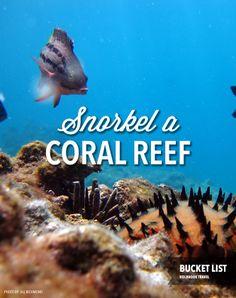 Bucket list: Snorkel a coral reef