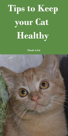 Cat Care Tips, Dog Care, Pet Tips, Cat Health, Health Care, Kitten Care, Cat Dad, Dog Agility, Happy Animals