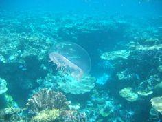 Wheeler Reef  Dive Site, Townsville (#ParkMyVan #VanHire #JethroBatts www.parkmyvan.com.au)