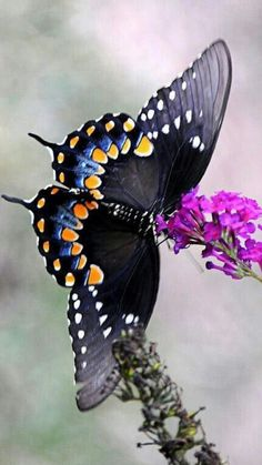 My butterfly obsession might be over, but this is still lovely. Butterfly Kisses, Purple Butterfly, Butterfly Flowers, Beautiful Butterflies, Beautiful Creatures, Animals Beautiful, Butterfly Chrysalis, Animals And Pets, Cute Animals