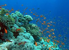 Snorkeling in Sharm El Sheikh, Egypt is fantastic. So many colors. Fishes and coral reefs.     Traveled there with Hege, Simen, Inga and Eirik