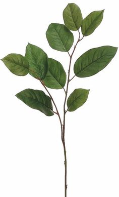 Accessorize your flower arrangements and wedding bouquets with this faux salal leaf spray in a lush two tone green. Two Tone Green Tall 9 Leaves, Wide Rose Leaves, Green Leaves, Plant Leaves, Lemon Leaves, Leaf Flowers, Leave In, Botanical Wall Art, Botanical Prints, Botanical Drawings