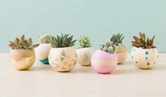 Succulent & Cactus Bell Cup Planters   - Darby Smart