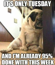 Tuesday Meme At Work Humor 100 Funny Tuesday Memes, Pictures & Images for Motivation Funny Tuesday Images, Funny Tuesday Meme, Happy Tuesday Quotes, Tuesday Humor, Thursday Meme, Taco Tuesday, Wednesday, Motivational Quotes For Love, Witty Quotes