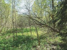 #bestoftheday #scenery #flora #lesagul #growth #leaf #tree #outdoors #trunk #scenic #россия # #photooftheday #branch #followme #nature #russian #season #park #wood #fair_weather #dawn #lush #landscape #tbt #follow #environment #scene