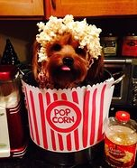Creative costume ideas for dogs: Puppy Corn Homemade Costume
