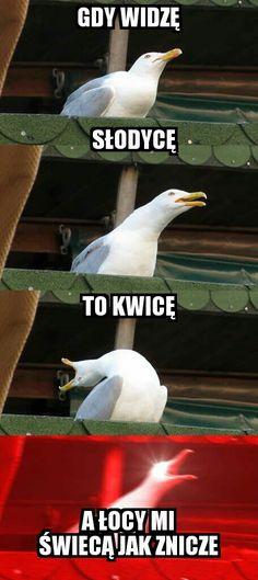 my chemical romance meme - Mcr memes - Funny Animal Memes, Funny Animals, Funny Jokes, Mum Jokes, 9gag Funny, Funniest Memes, Animal Quotes, My Chemical Romance, Vogel Memes