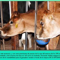 Las previsiones auguran unos precios estables de la leche en Estados Unidos durante los próximos 4 años, por lo que la mejora de márgenes de los ganaderos vendrá por la eficiencia y las calidades. Resumen de la ponencia de Fernando Valdez, vicepresidente de Kemin para Norteamérica, en las jornadas que organizó esta empresa en Lugo