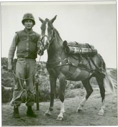 A Mongolian mare named Reckless, a national hero, joined the Marines during the Korean War.  Her brave service got her promoted to Sergeant.  Her Military Decorations included two Purple Hearts, Good Conduct Medal, United Nations Service Medal, & Republic of Korea Presidential Unit Citation, all of which she wore proudly.