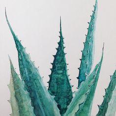 Aquarellzeichnung Aloe Vera - eineckig.com