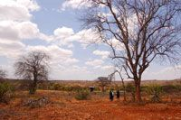 In February 2011, just three months after the drought in Africa began, Compassion Kenya reported that more than half of the Compassion centers in the country had been affected by the drought.