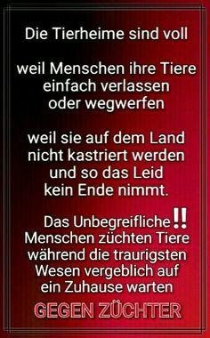 Tierleid: DESHALB GEGEN ZÜCHTER!