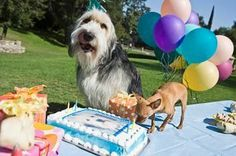 Dog Birthday Cake Recipe.   If you're an animal lover, please visit www.whatcanwe.org