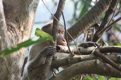 Another critter spotting: this time a monkey hanging around our base in Kerala, India. Personal And Professional Development, Volunteer Abroad, Kerala India, United Kingdom, Monkey, Base, Animals, Jumpsuit, Animales