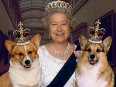 Fun Fact: The Corgi is a part of the royal family in England. Queen Elizabeth II has several Corgis and has held gatherings with other breed enthusiasts. Lady Diana, Pet Shop Online, Die Queen, Isabel Ii, Queen Of England, England Uk, London England, British Monarchy, Royal Monarchy