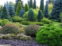 site full of conifer garden pictures, love