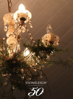 Nature reaches for the light #stoneleighno50 #wild #light #interiors