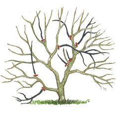 Magnolien richtig schneiden When cutting magnolias, always remove whole shoots or cut them into a side shoot Bonsai Fruit Tree, Pruning Fruit Trees, Bonsai Tree Care, Indoor Bonsai Tree, Terrarium Plants, Bonsai Plants, Bonsai Garden, Bonsai Pruning, Tree Pruning