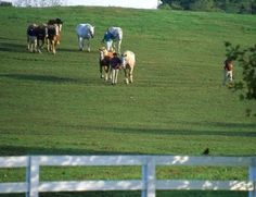 Minimize Mud In Your Horse Pasture This Spring