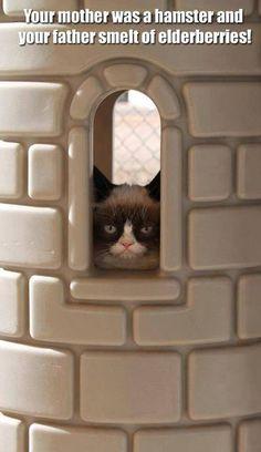 Monty Python  Grumpy Cat!
