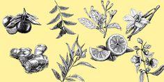 Les huiles essentielles pour une bonne digestion