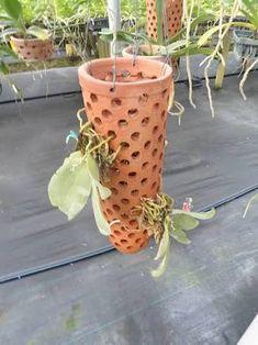 Resultado de imagen para orquideas plantadas em telhas
