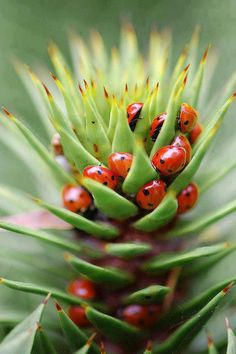 Ladybugs are good for your garden
