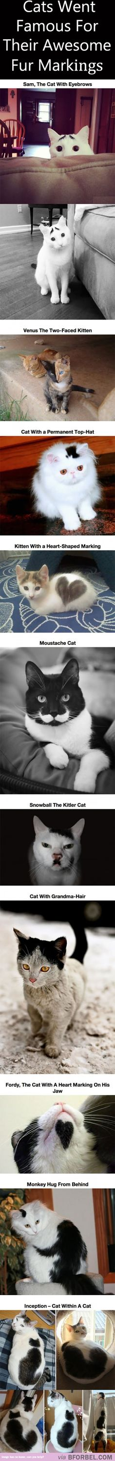 10 Cats That Became Famous For Their Awesome Fur Markings…
