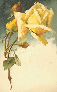 pale yellow rose against dark blue sky