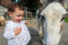 tamar-valley-donkey-park-donkey