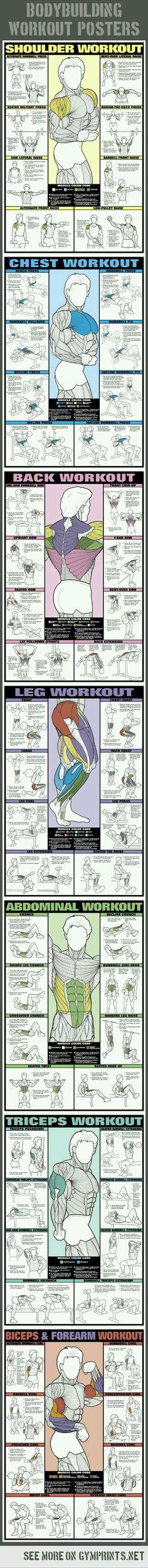 #musclebuildingworkouts