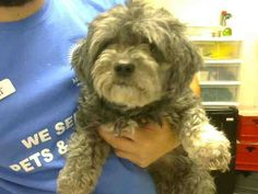 ~ Animal ID #A3603920   ‒ I am a Female, Gray Miniature Poodle mix. The shelter thinks I am about 3 years old. I have been at the shelter since May 16, 2015.   Maricopa County Animal Care & Control West Valley Animal Care Center ‒ (602) 506-7387 2500 S. 27th Avenue Phoenix, AZ Fax: (602) 506-2739 https://www.facebook.com/OPCA.Shelter.Network.Alliance/photos/pb.481296865284684.-2207520000.1432210029./822764327804601/?type=3&theater