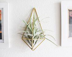 Himmeli fig. 3 - Wall Sconce   Brass Air Plant Holder   Modern Minimalist Geometric Ornament by handmadesammade on Etsy https://www.etsy.com/listing/183958224/himmeli-fig-3-wall-sconce-brass-air