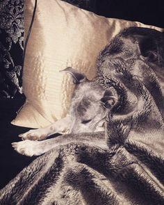 Ok I'll have to call it a night  #dog #dogs #puppy #pup #cute #instagood #dogs_of_instagram #pet #pets #petsagram #handsomedog #photooftheday #dogsofinstagram #ilovemydog #instagramdogs #nature #dogstagram #dogoftheday #lovedogs #lovepuppies #houn