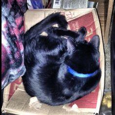 Sleeping on a box :) #black #cat # kitten #kitty #babyboy #blackcat #blackkitty #blackkitten #yelloweyes