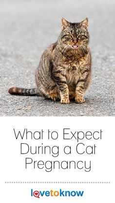 Don't wait too long to prepare for Kitty's pregnancy. Get a list of pregnancy signs, learn about the delivery process, and watch a video of a live birth. Pregnant Cat, Crochet Cat Toys, Cat Nutrition, Fish Care, Pet Dogs, Pets, Cat Health