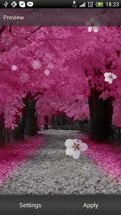 Kirsikankukka Live-Taustakuva - Android-sovellukset Google Playssa
