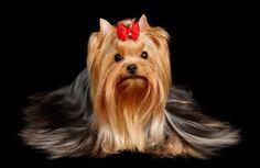 20 Pet Ideas Pets Pet Grooming Cute Animals