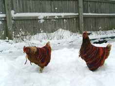 Capes for chickens - how cute!