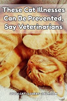 These Cat Illnesses Can Be Prevented, Say Veterinarians and the Humane Society of the United States.