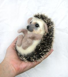 Not usually one for baby animal pics- but this little guy is tooo cute!