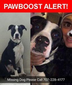 Please spread the word! Raider was last seen in Rohnert Park, CA 94928.    Nearest Address: Near Walnut Cir & Cottonwood Ct