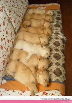 My Friend Posted on Fb Thought R/aww Would Like, 8 Sleeping Puppies
