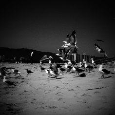 BW Venice Beach