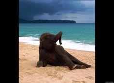 Cute baby elephant plays on the beach in Thailand.