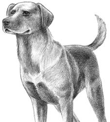 Drawing realistic animals how to draw a dog draw animals how to draw a dogthe idiots quick guide ccuart Image collections